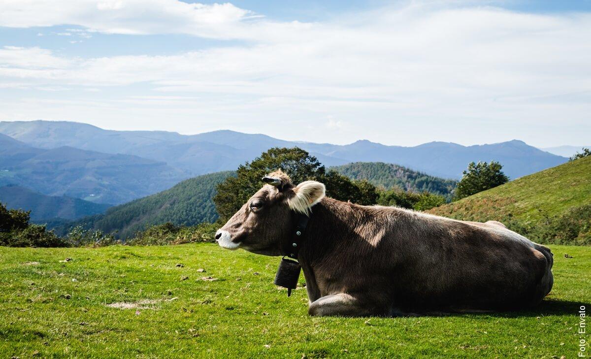 ¿Qué significa soñar con vacas? ¡Conócelo y sorpréndete!