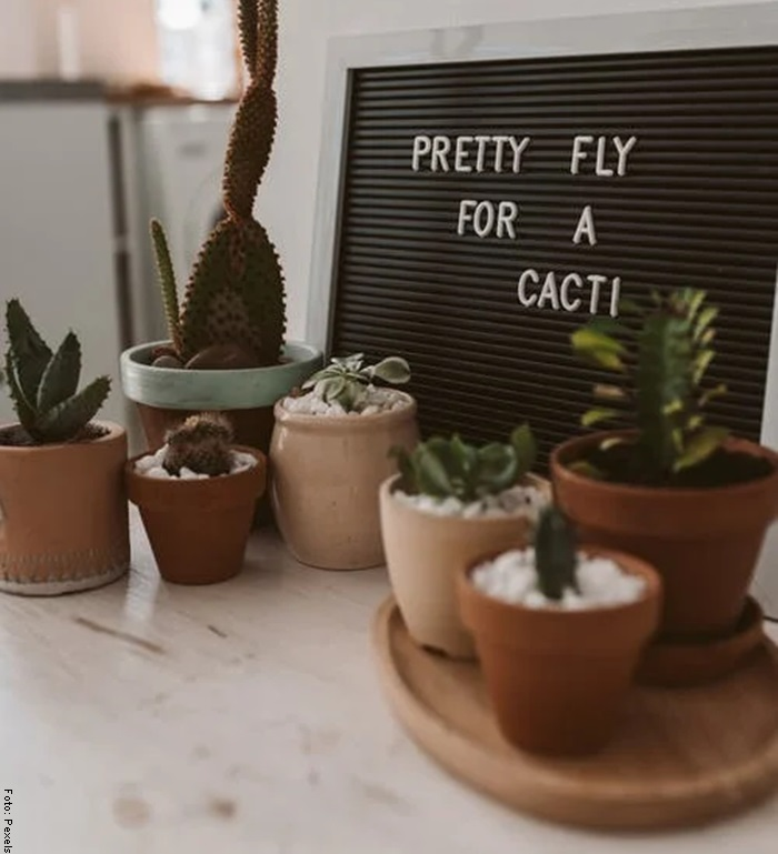 Foto de varias plantas para ilustrar suculentas cuiddados