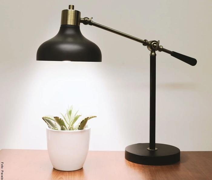 Foto de una suculenta bajo una lámpara