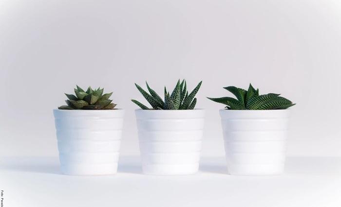 Foto de varias plantas suculentas