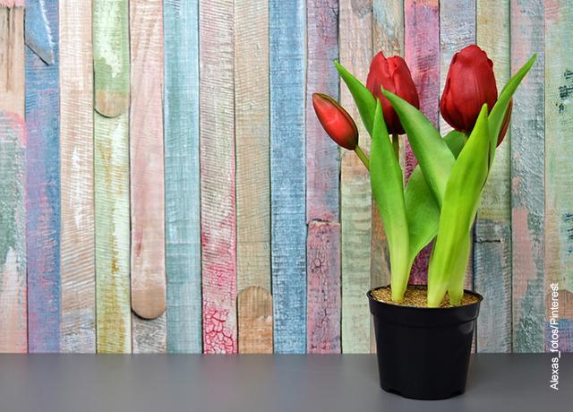 Foto de una maceta con tulipanes