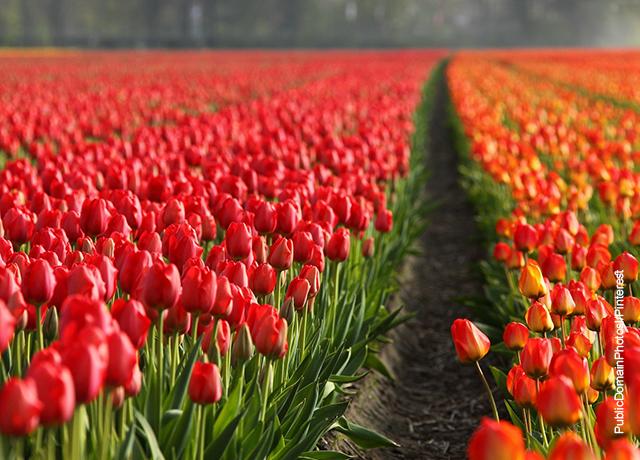 Foto de un camino lleno de flores naranjas y rojas