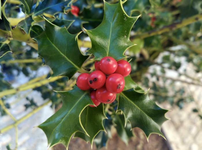 Foto del árbol símbolo de navidad