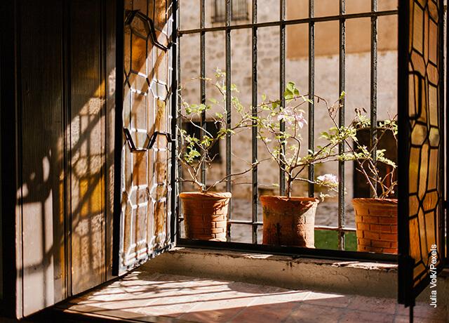 Foto de un árbol de jade en la entrada de una casa
