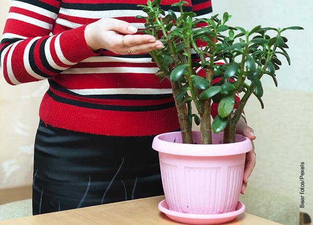 Foto de un bonsái en una maceta rosada