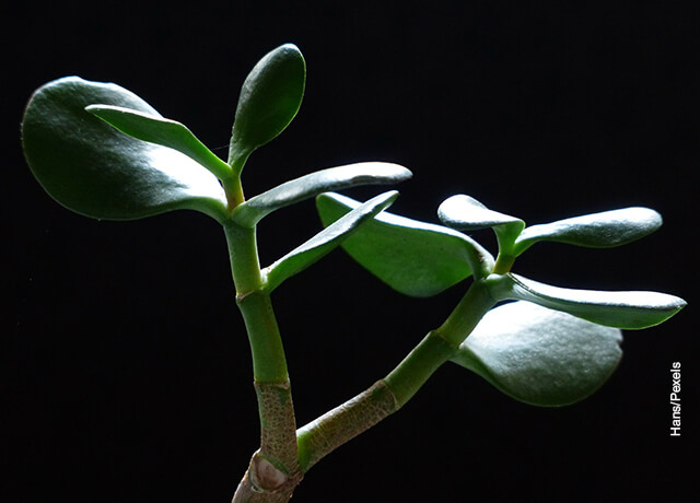 Foto de la rama de un planta