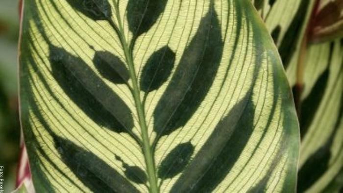 Foto de una hoja de cebra