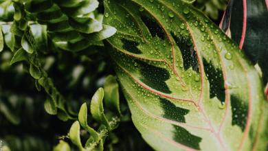 Calathea, cuidados y secretos de esta curiosa planta