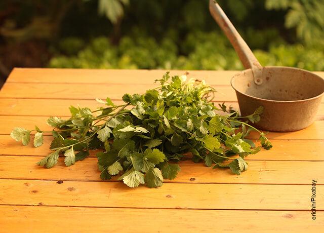Foto de cilantro sobre una mesa qe muestra el chimichurri receta casera
