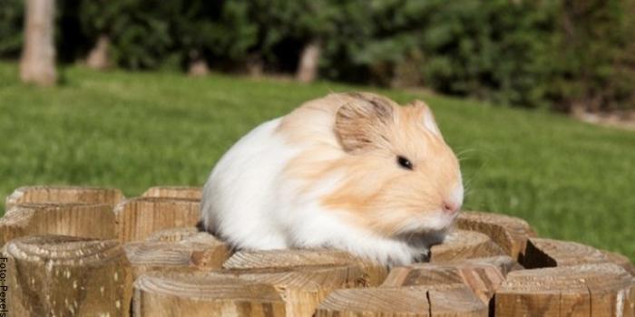 Foto de un roedor haciendo ejercicio