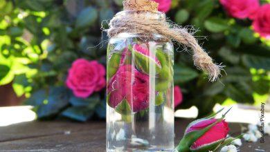 Foto de un recipiente con agua que ilustra cómo hacer agua de rosas