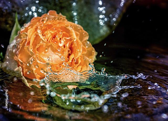 Foto de una rosa en una cascada