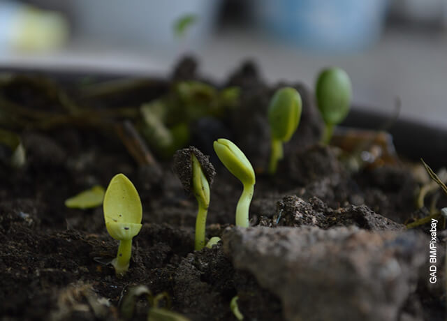 Foto de unas plantas germinando