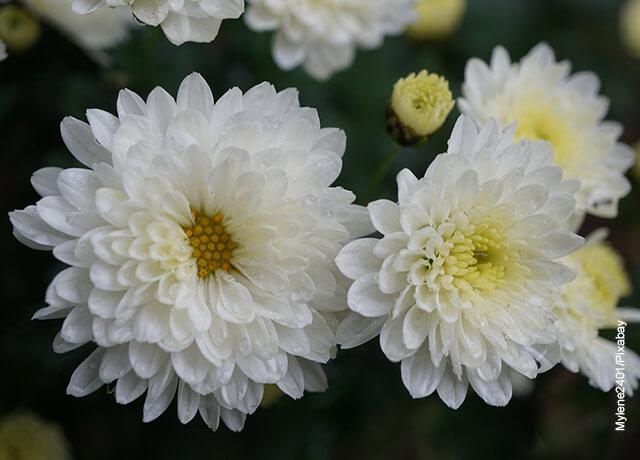 Foto de flores de hojas blancos en el campo