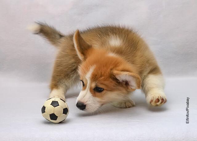 Foto de un cachorro de perro jugando con una pelota