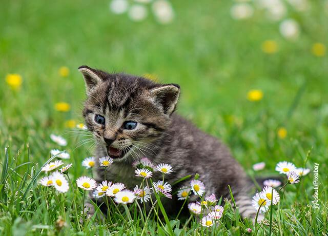 Foto de un gato pequeño jugando en el parque
