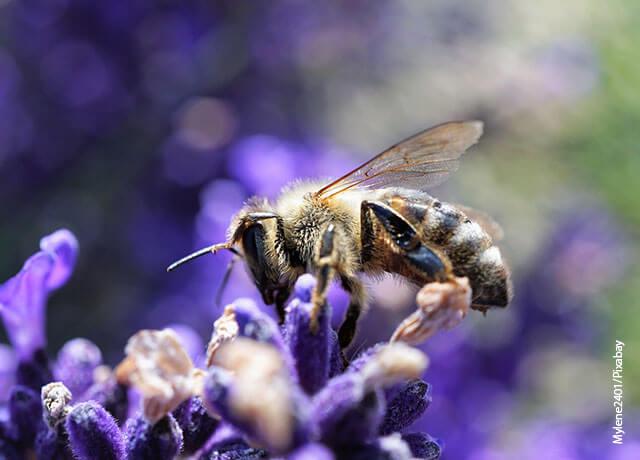 Foto de una abeja sobre una flor