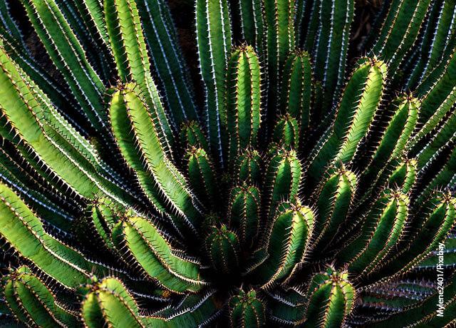 Foto de un cactus que muestra el cuidado de la biodiversidad