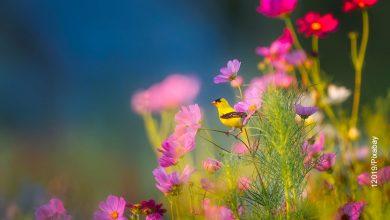 Foto de un pajarito amarillo que muestra el cuidado de las plantas
