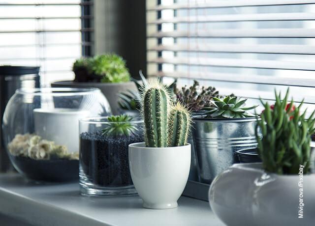 Foto de plantas en macetas que muestran el cuidado de las plantas