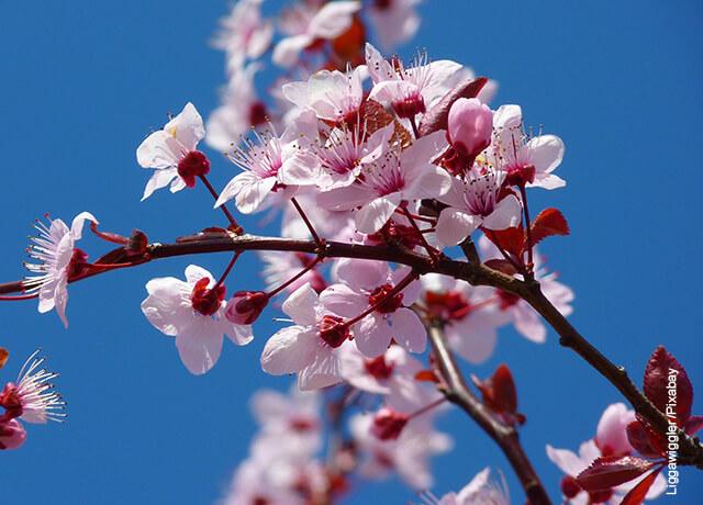 Foto de una rama con flores blancas