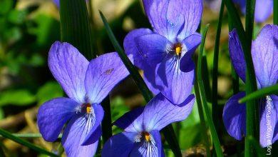 Foto de una planta azul en el campo