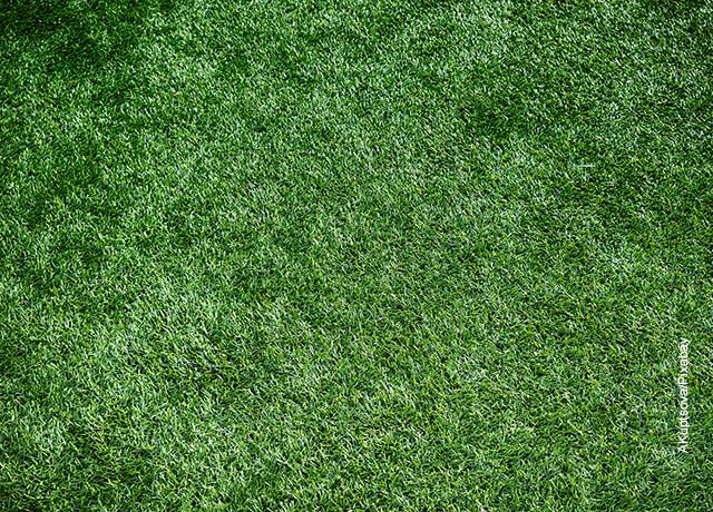 Foto de pasto artificial que revela los cuidados del césped