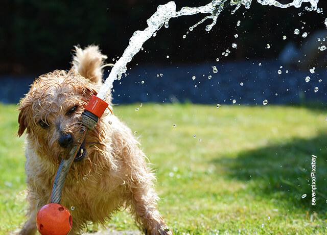 Foto de un perrito jugando con una manguera de agua