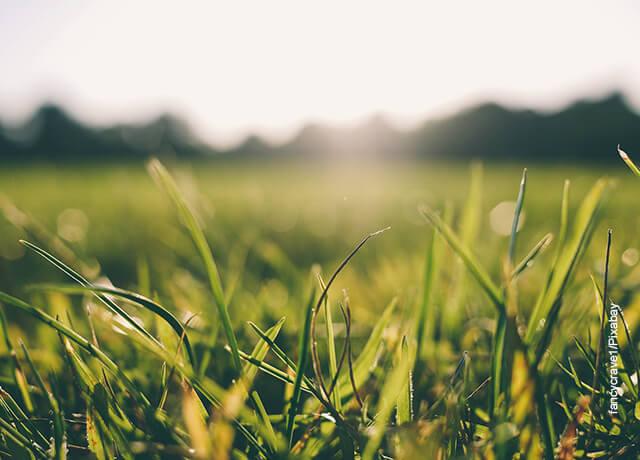 Foto de una pradera al amanecer