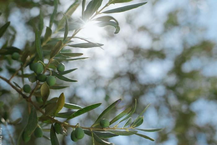 Foto de una planta con frutos