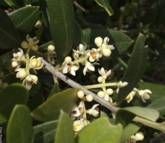 Foto de una planta con flores