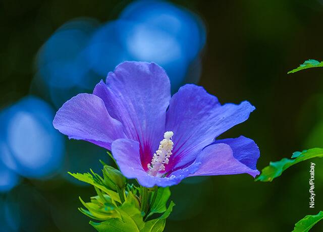 Foto de una flor morada sembrada en un campo