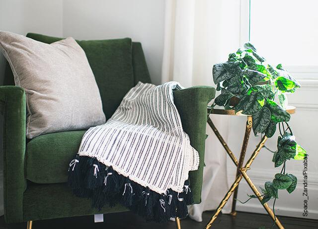 Foto de una planta al lado de un sillón