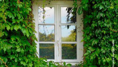 Foto de una ventana rodeada de plantas