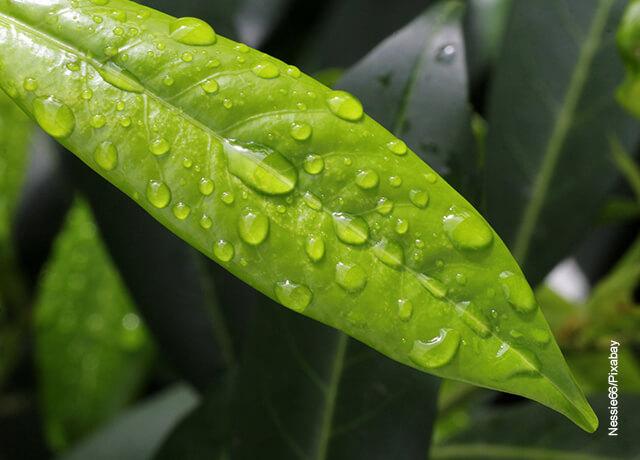 Foto de una hoja de planta con gotas de agua