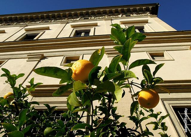 Foto de unos limones amarillos colgados en un árbol