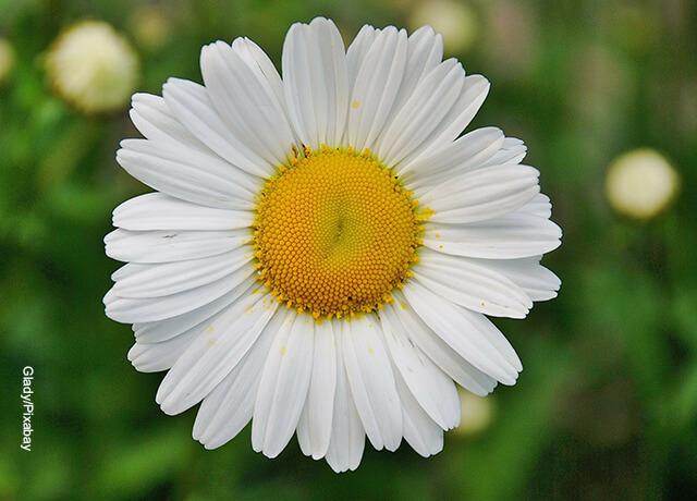 Foto de una flor con pétalos grandes