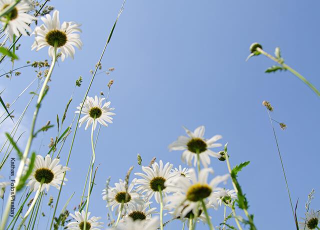 Foto de un sembrado de flores