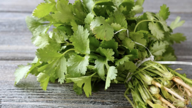 Para qué sirve el cilantro, propiedades para la salud