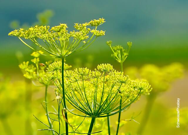 Foto de una planta salvaje amarilla