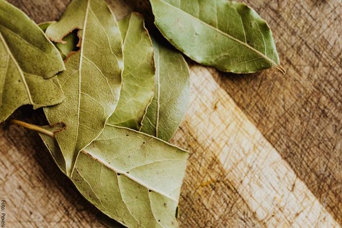 Foto de unas hojas de laurel para ilustrar para qué sirve