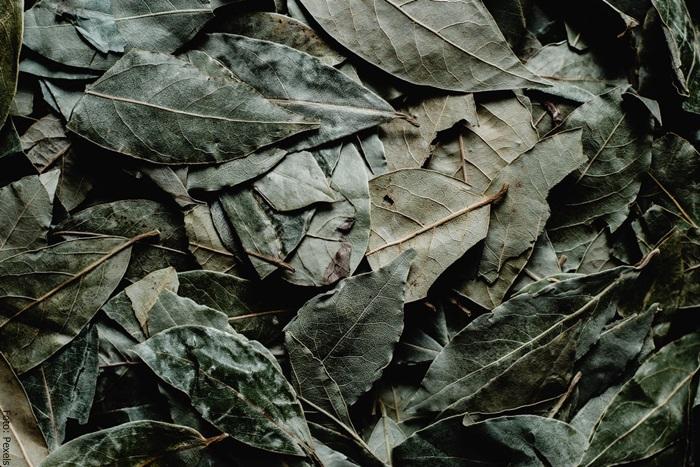 Foto de unas hojas para ilustrar para qué sirve el laurel