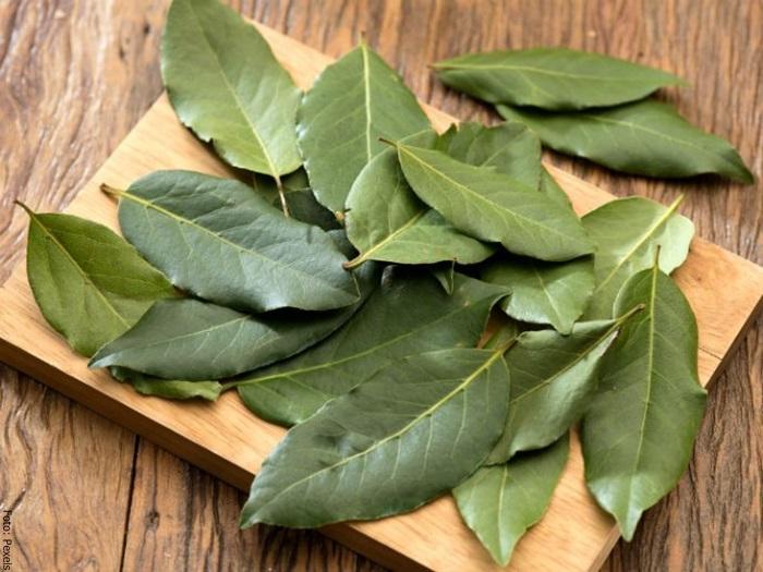Foto de unas hojas de laurel
