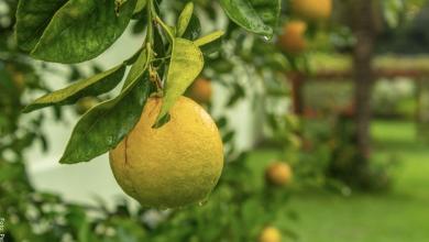 ¿Para qué sirve el limón? ¡Hace milagros!