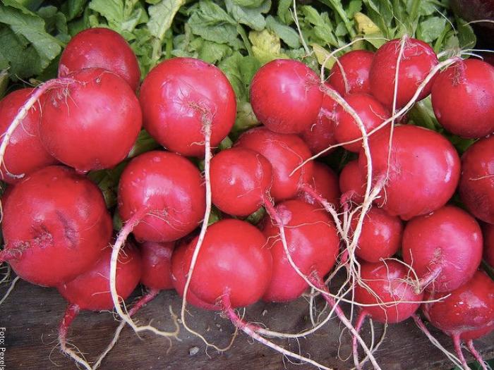 Foto de la verdura para ilustrar para qué sirve el rábano
