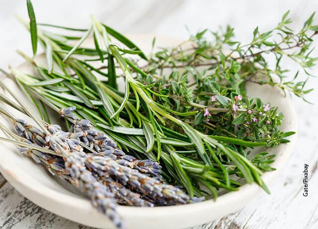 Foto de plantas aromáticas en un plato