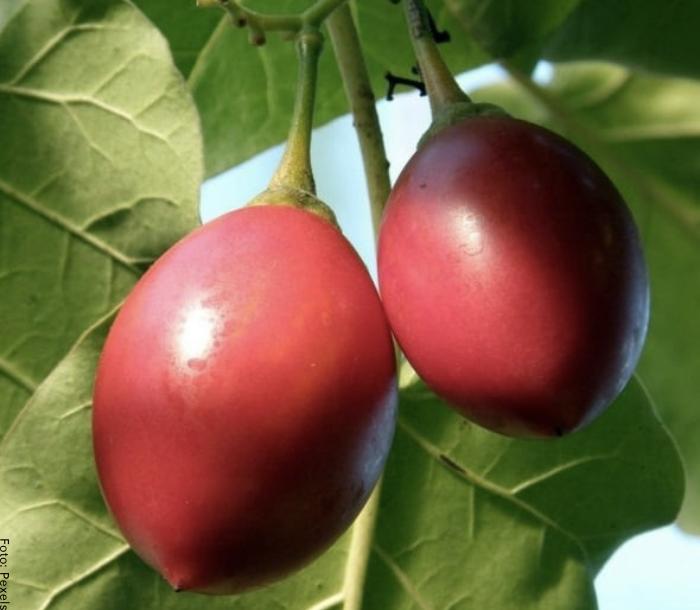 Foto de unos frutos de tomate de árbol