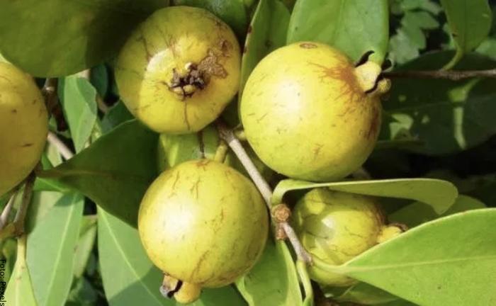 Foto de la fruta con algunas hojas