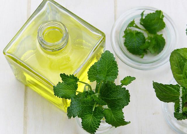 Foto de aceite esencial en un recipiente que ilustra para qué sirve la menta