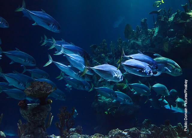 Foto de peces multicolores nadando